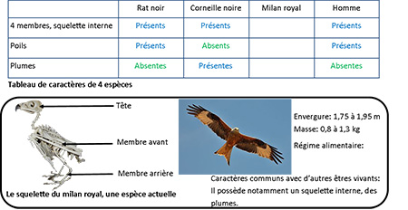 Sciences De La Vie Et De La Terre 5 Exercices D Entrainement Sans Espece Fossile Classification En Groupes Emboites